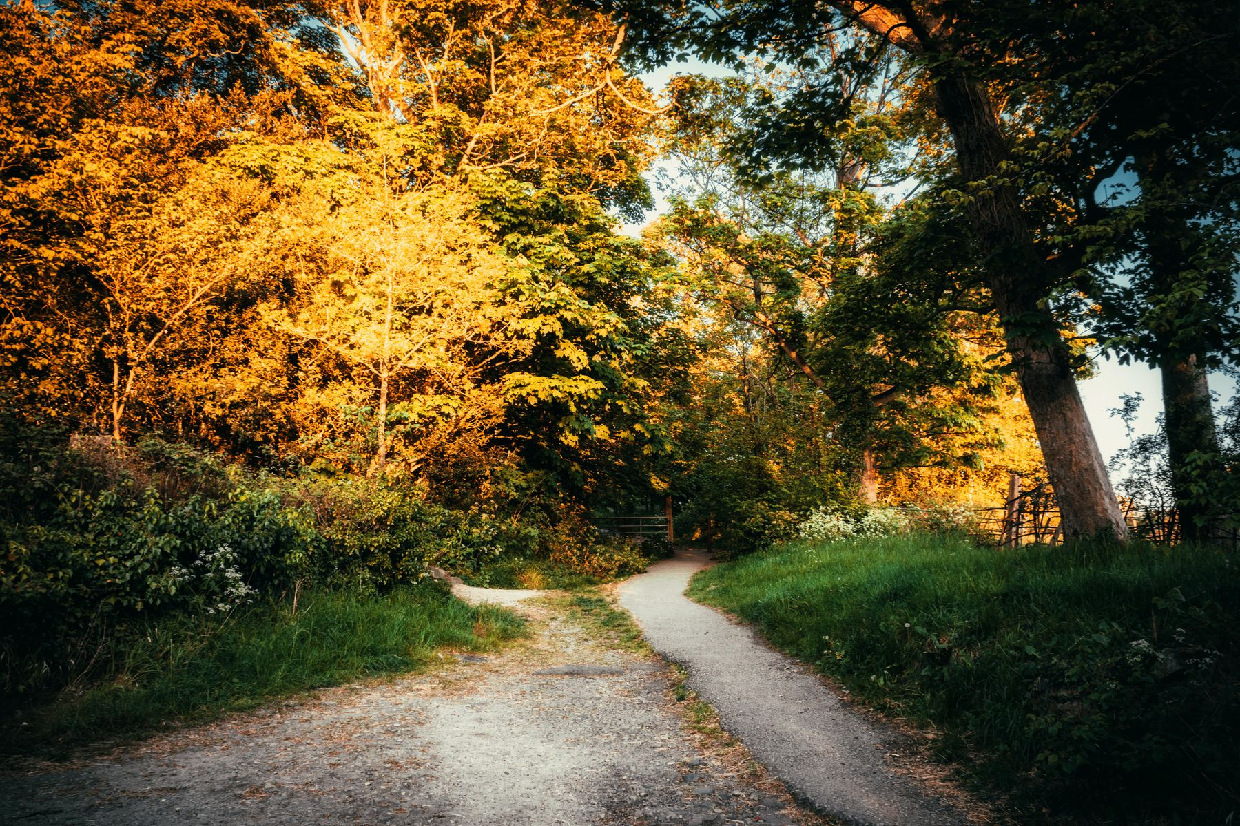 fall wooded trail